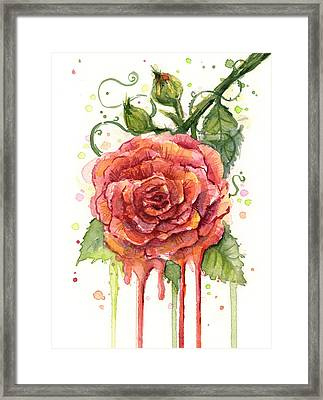 Red Rose Dripping Watercolor  Framed Print by Olga Shvartsur