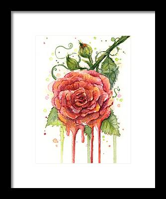 Red Rose Framed Prints