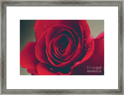 Framed Print featuring the photograph Red Rose Floral Bliss by Sharon Mau