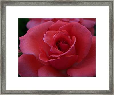 Red Rose For Love Framed Print by Vicki Berchtold