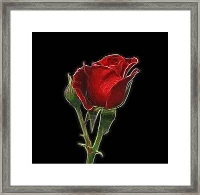 Red Rose II Framed Print