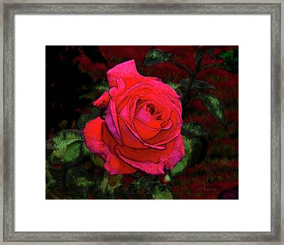 Red Rose Framed Print by Joe Halinar