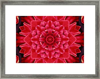 Red Rose Kaleidoscope Framed Print by Cathie Tyler