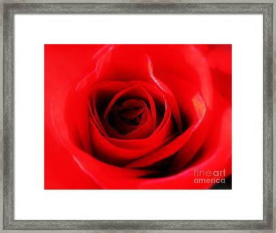 Red Rose Framed Print by Nina Ficur Feenan