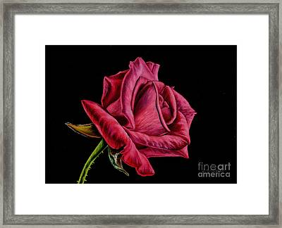 Red Rose On Black Framed Print by Sarah Batalka