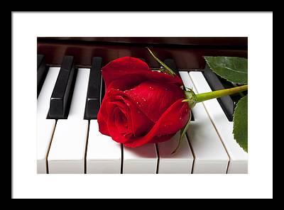 Red Roses Framed Prints