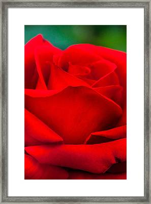 Red Rose Petals 2 Framed Print