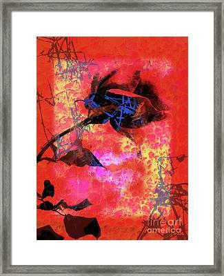 Red Rose Framed Print by Robert Ball