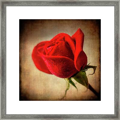 Red Rose Romance Framed Print by Garry Gay