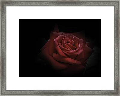 Framed Print featuring the photograph Red Rose by Ryan Photography