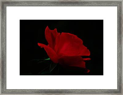 Red Rose Framed Print by Trudi Southerland