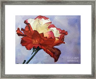 Watercolor Of A Red And White Rose On Blue Field Framed Print