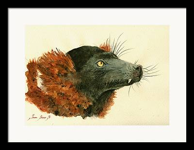 Red-ruffed Lemur Framed Prints