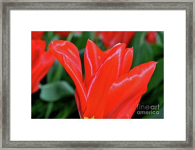 Red Satin Framed Print