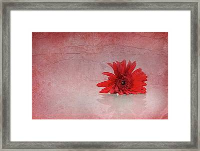 Red Scent Framed Print