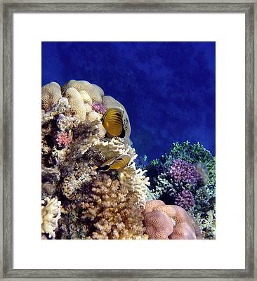 Red Sea Exotic World Framed Print