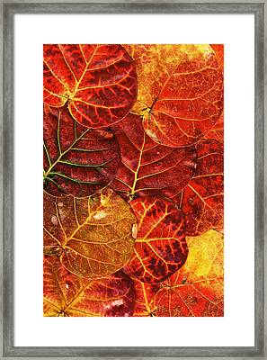 Red Sea Grapes By Sharon Cummings Framed Print