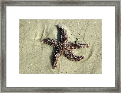 Red Sea Star Framed Print