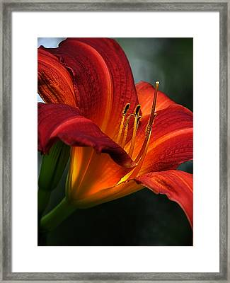 Red Seduction 2 Framed Print