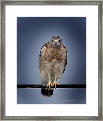 Red Shoulder Hawk Framed Print by Joseph G Holland