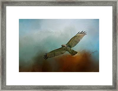 Red Shoulder In Autumn Framed Print by Jai Johnson