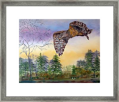 Red Shouldered Hawk Framed Print by Mikki Alhart