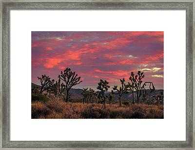 Red Sky Over Joshua Tree Framed Print