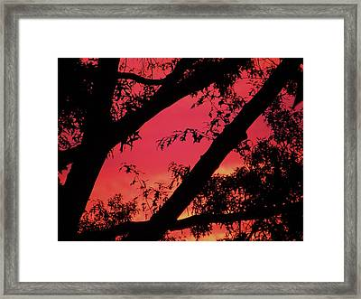 Framed Print featuring the photograph Red Sky by Susan Carella
