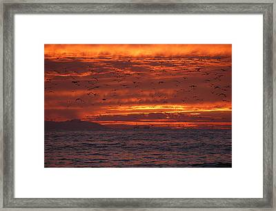 Red Sky  Framed Print by Wendy  Coloma