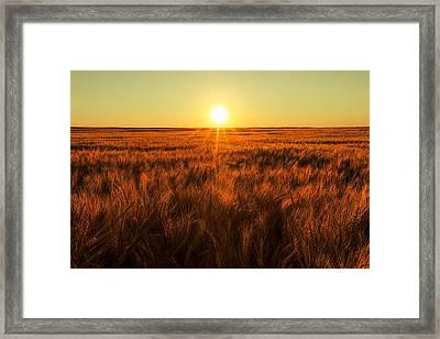 Red Sky Wheat Framed Print