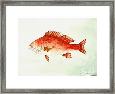Red Snapper Framed Print