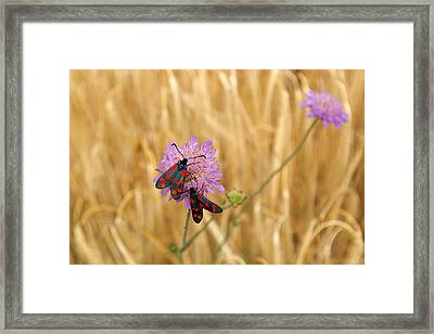 Red Spotted Couple In Wheat Field Framed Print by Jessica Rose