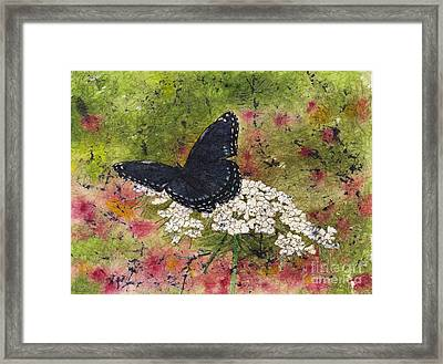 Red Spotted Purple Butterfly Queen Annes Lace Batik Framed Print