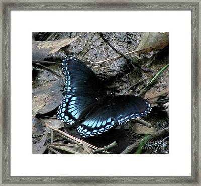Framed Print featuring the photograph Red Spotted Purple Swallowtail Butterfly by Donna Brown