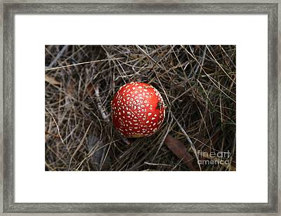 Red Spotty Toadstool Framed Print