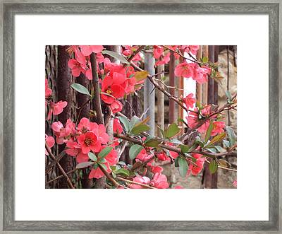 Red Spring Framed Print by David Du Hempsey