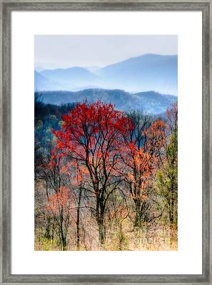 Red Spring Framed Print by Irene Abdou