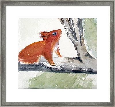 Framed Print featuring the painting Red Squirrel by Sibby S