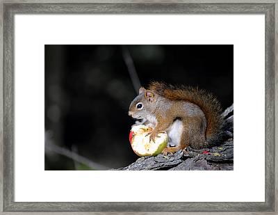 Red Squirrel Framed Print by Steven Scott