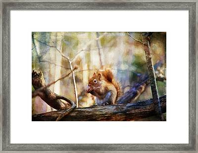 Red Squirrel With Pinecone Framed Print