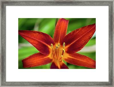 Red Star Framed Print