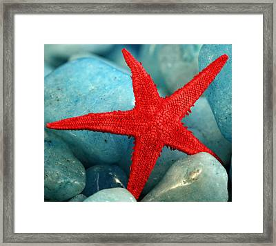 Red Starfish Framed Print