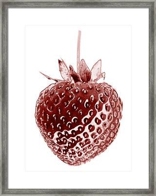 Red Strawberry Botanical Illustration Framed Print
