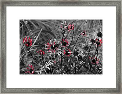 Framed Print featuring the photograph Red Streaks by Deborah  Crew-Johnson