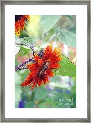 Red Sunflower Framed Print