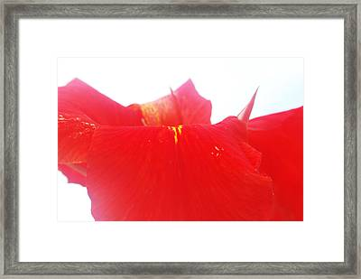 Red Framed Print by Susette Lacsina