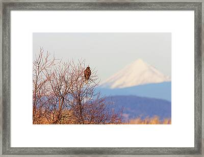 Red-tailed Hawk And Mount Shasta - Northern California Framed Print by Ram Vasudev