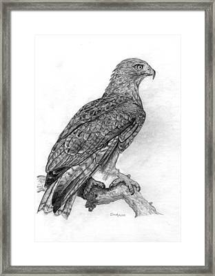 Red Tailed Hawk Framed Print by Cynthia  Lanka