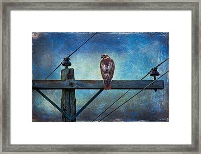 Red-tailed Hawk On Power Pole Framed Print