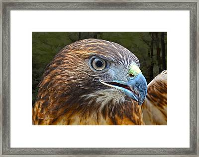 Red-tailed Hawk Portrait Framed Print by Sandi OReilly